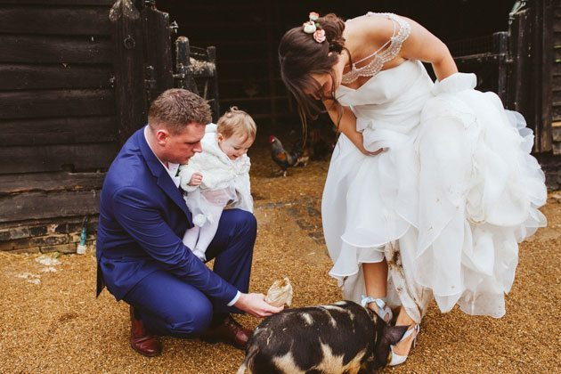 South Farm wedding photography of pig sniffing bride's shoes