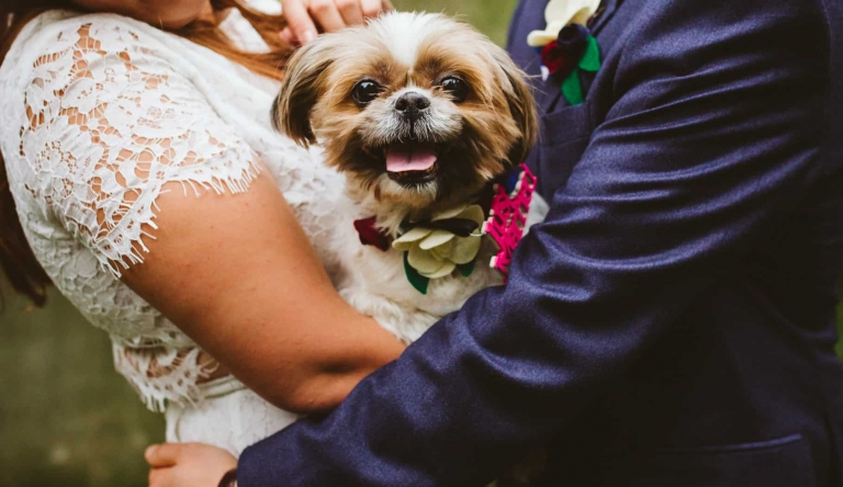 Dog at London wedding by Hertfordshire wedding photographer Clare Tam-Im